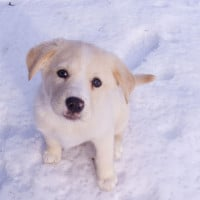 Image of puppy in snow