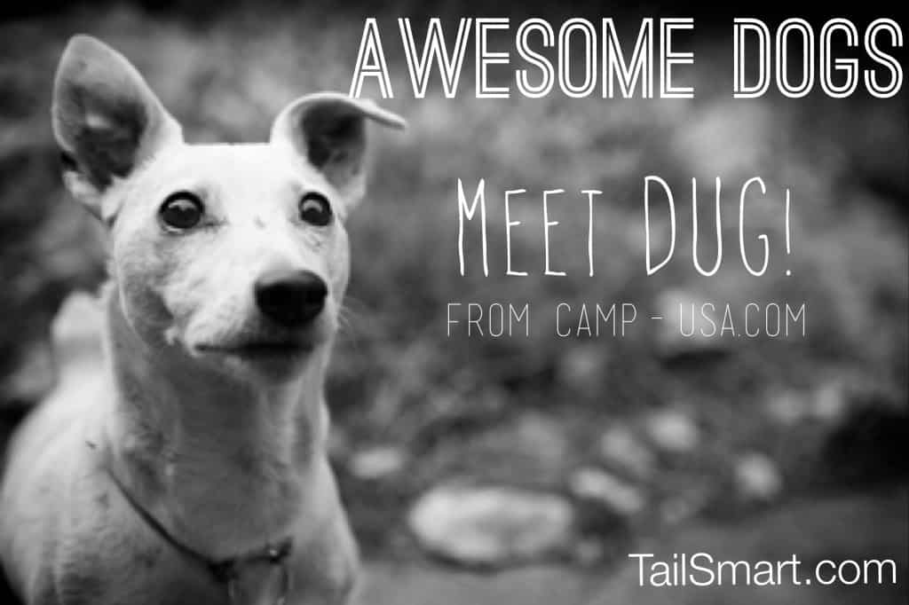 Awesome Dog Dug from CAMP