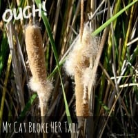 Ouch! My Cat Broke Her Tail
