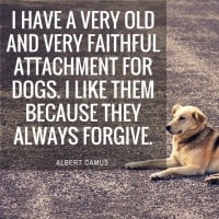 Dogs Always Forgive Albert Camus Quote