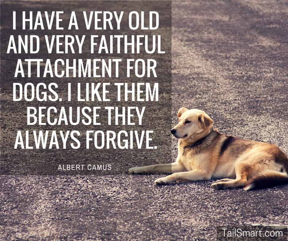 Dogs-always-forgive-Albert-Camus