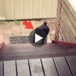 Dog has mastered the stairs arcade style [video]