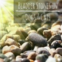 Bladder stones in dogs and cats
