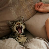 Cat meowing at night? Here are 12 ideas to help you get some sleep
