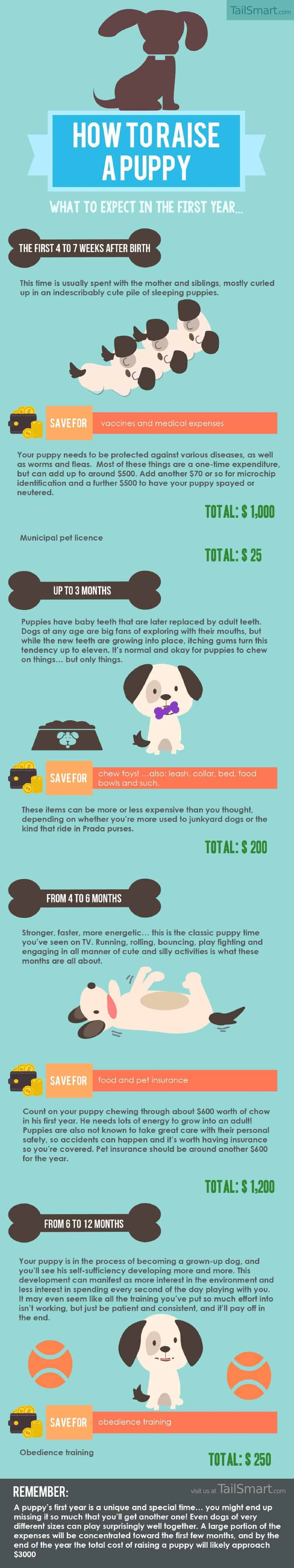 Infographic describing what a new puppy owner can expect in the first year.