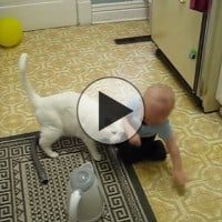Baby Boy Emits Catnip… Becomes Leader of the Cats.