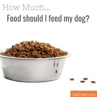 How much food should I feed my dog?