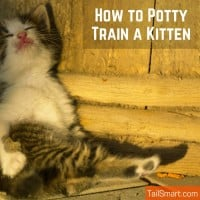 How to Potty Train a Kitten