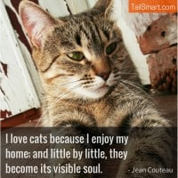 I Love Cats Because I Enjoy My Home – Jean Couteau [quote]
