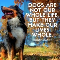 Dogs Make Our Lives Whole – Roger Caras [quote]