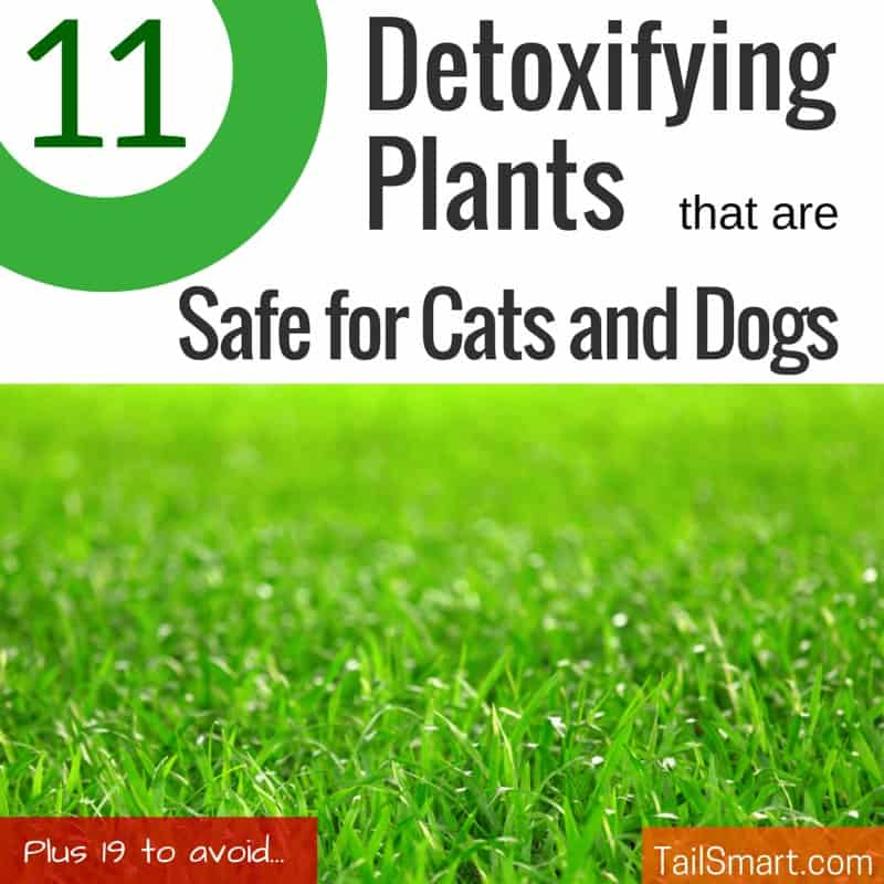 11 Detoxifying plants that are safe for cats and dogs