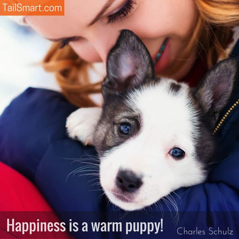 Happiness is a warm puppy Charles Shulz quote