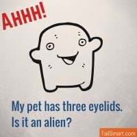 My pet has three eyelids. Is it an alien?