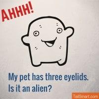 My pet has three eyelids. Is it an alien?