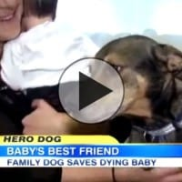 Rescue dog saves baby