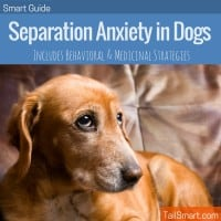 Separation Anxiety in Dogs the Smart Guide