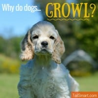 Why do dogs growl?