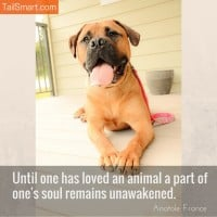 Soul remains unawakened – Anatole France [quote]