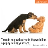There is no psychiatrist in the world like a puppy licking your face.