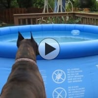 Dogs Spooked by Floater