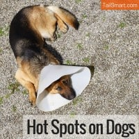 Hot Spots on Dogs