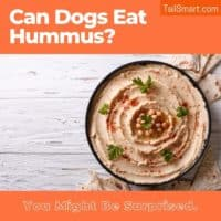 Can dogs eat hummus?