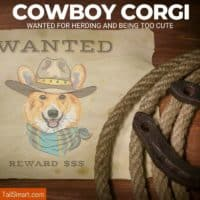 cowboy corgi