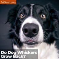 Do dog whiskers grow back?