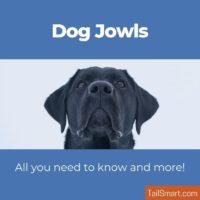 Dog Jowls